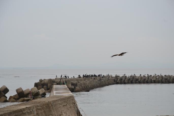 Himakajima 8